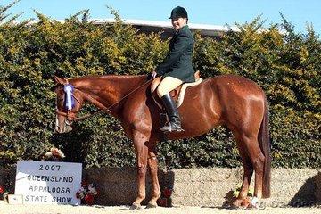 Junior Horse Hunter Under Saddle champions Suthern Docs Dreamcat & Joanne  Johnson.