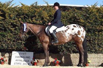Senior Horse Hunter Under Saddle champions Manzanita (K George) & Kerris Holzberger.