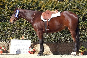 2 Year Old Hunter Under Saddle Futurity champion, TS Breeze By Hollywood (Meaghan Hennessy).