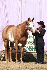 Champion 2002 & Over Mare was Kinda Shameless shown by Samantha Daley for owner, Melissa Cruden.