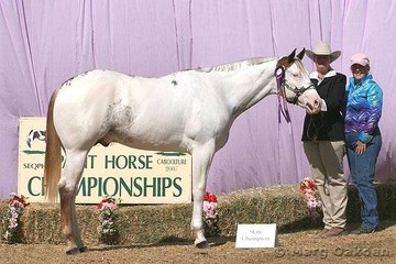 Touchstone, owned by Susan Frost & Robert Camfferman, was shown by Cherise McLaughlin to the championship of the 2005 Colt class.