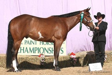 Leanne Bartlett showed Only With Concent to be reserve champion of the 2004 Gelding class for owner Carleen Peperzeel.