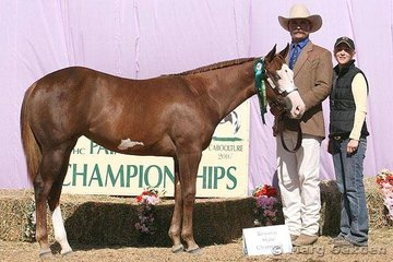 The reserve champion 2006 Filly was Moonglades Best Robin shown by Mark Peek.