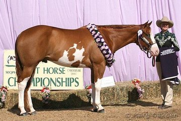 Grand Champion Gelding honours went to Kill F'Loot shown by his very delighted owner, Desrae Gant.