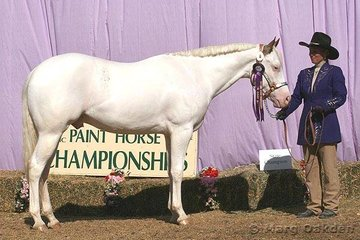 Kim Reardon's PP Smoke N Ice was the champion 2005 Gelding of the 2007 Queensland Paint Horse State Championships.