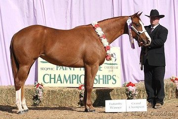 Grand Champion Paint-Bred Mare/Filly & Paint-Bred Yearling Futurity champion, RU Kid N Me shown by Kim Harris.