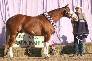 Grand Champion Stallion/Colt was Karen Lonski's SC Showdown shown by Craig Dengate.