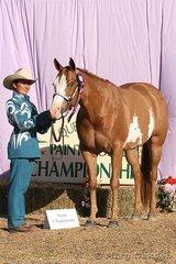 Melissa Benson showed Kinda Shameless to the championship in the Senior Youth Showmanship At Halter.