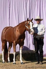 Mark Bellinger showed Deadly Ransom in the 2 Year Old Colt class for owner Amanda Sproules.
