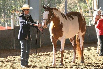 Patrisha Marriott showed Quirran-Lea Tina O Lena in the 4 Years Old & Over Mare class.