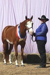 Kym Johnson was very delighted to receive a Champion Gelding sash for her horse, Just Zippin.