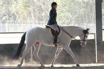 Amateur Hunter Under Saddle competitors, Rocklea Romeo & Gail Chuter.