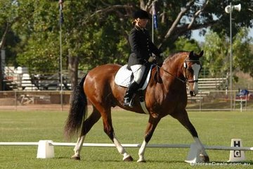 Well known local rider and instructor Teresa Cunnington and her splendid looking TC Worrior in the Official Novice 2.3.