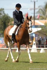 Chris Hazel rode Patchwork Classic Edge into second place in the preliminary 1.4.