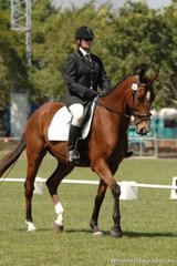 Tammy Stone and Lunar Ruler enter the arena in the Assoc. Novice 2.4.