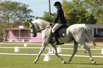 Rian Smit and Bouncing Sam Jago look good during their Preliminary 1.4 test.