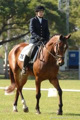 Jan Gillian rode her Warmblood,Torlea Wilkinson into equal third place in the Official Novice 2.3.