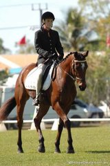 Shaylee Bird rode Victorian bred, Hollybrook Milton into first place in the Open/Associate 1.2.