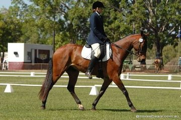Samantha Perez-Ruiz and Stonage Tales competed in the Open/Associate 1.2.