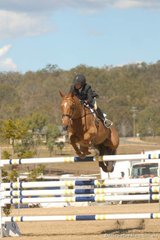 Very well-performed New Zealand rider, Sue Thompson is seen her with her successful 'Ayr Hill The Rajah'.
