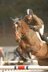 Vicki Roycroft with her usual look of determination, rode 'Noblewood Park Blatini', an imported mare by Burggraaf, to take second place in the final Silver Series qualifier.
