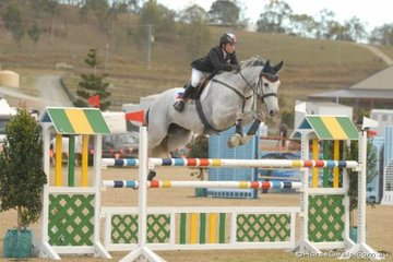 Michelle Barrera, back in the saddle after study commitments with the Australian Sporthorse Breeders lovely imported Indorado mare, 'Alondra'.