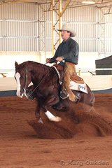 Andrew Behrens' Lethal Little Destiny was ridden by Wayne Williams in the Open Futurity first go-round.