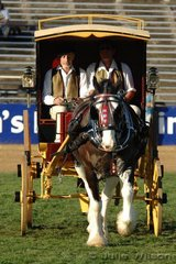 Ross Porter at the reins, with Jed Patterson grooming, drove his 'Charles' to win the class for  Four Wheeled Miscellaneous Turnout for Medium/Heavy Horse.