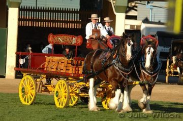 Mike Keogh brought this impressive pair of Coopers Clydsdales all the way from Adelaide.