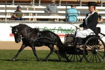 Tracy Byrne urges her Miniature Horse, 'Carala Zolton' forward to win the Open Shetland, Miniature Pony/Horse Mare or Gelding class.