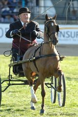 Ashleigh Allison-Woods drove his 'Ashwood Elite' to win the Novice Hackney Pony 12.2-14hh class.