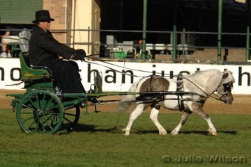 Wayne Wilson drove his charming, 'Mini Country Dakota' to take second place in the Shetland, Miniature Horse/Pony Srallion class.