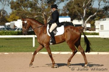Karen Perry rode BV Red Devil in the CNC**. It was difficult for the riders competing late in the afternoon, as there was so much discussion concerning the Equine Influenza outbreak and what was going to happen with the horses at Werribee Park.  Karen decided to stay and went on to win the CNC**.