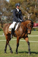 Well known former Tasmanian, Catherine Davies rode Volcanic Ruler to be placed mid field after the dressage phase of Preliminary C.