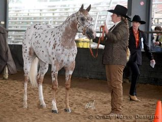 Ellsan Ginger Megs Dream is inspected by judge Kerris Holzberger during the 2 yr old Futurity class