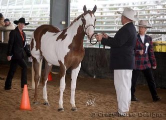 EPL Royal Reign & Rod Duddy stand for the judges inspection during the 2 Year Old Halter Futurity