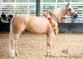 Winner of the 4 Years & Over Halter Futurity was EPL Ellegally Blonde