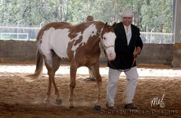 With a bit of coaxing from the sidelines Rod Duddy shows EPL Painted Toa Te in the Best Trot class in the Pinto ring