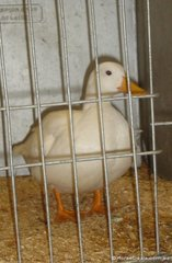 This little duck totally unfazed by the occasion.