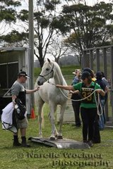 Kate Caughey takes 'Maralinga Saleem'  through the weighing process which was part of the pre-vetting procedures