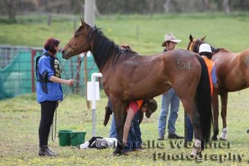 Tania Foster's 'Shintaar' being given a thorough vet check