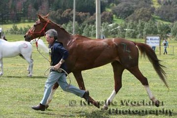 2007 Tom Quilty President, Ian Symington and 'Wandu Hills Free Spirit' stepping out in the pre-vetting area