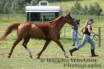 Stepping out in the pre-vetting area by Kerry Moody and 'Mistletoe'