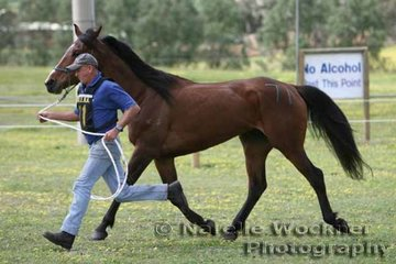 NSW competitor Allan Caslick and his loan horse 'Mariba Moontrip' going through their paces for the pre-vetting