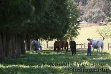 Horses were given a chance to relax for a while after pre- ride vetting before the gruelling ride
