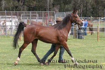 Christopher Haddon and 'West Coast Dayan' going through their paces in the pre-vetting