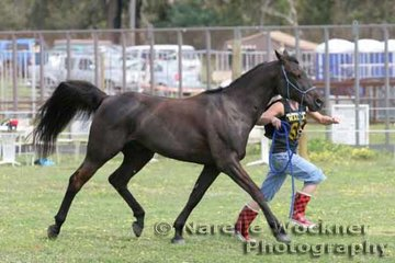 Jacinta Maurer wearing some rather colourful boots and 'Leika Malik' go through their paces in the pre-vetting