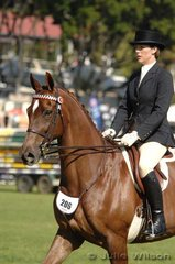 A bright new face on the Royal show scene, Fox Trot ridden and owned by Priscilla Airey. Eight year old, Fox Trot by the stayer Unrelenting, was only at his sixth show.