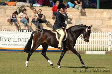 Working out in the Ridden Riding Pony Mare or Gelding over 12.2-13.2hh, Beckworth Rising Suprise , exhibited by Belinda Leeson.
