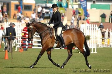 Karryn Walker exhibited Waterford Centre Stage to take second place in the Medium Weight Hack over 15 hands.